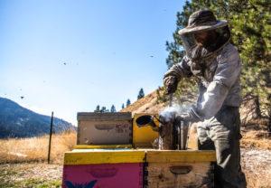 Montana Bees