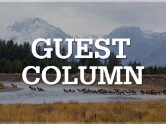 guest column banner